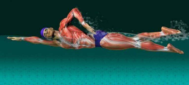 Картинка рука мышцы