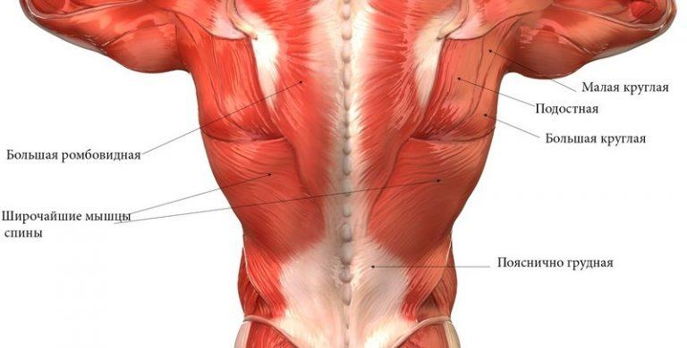 Почему возникает спазм мышц спины