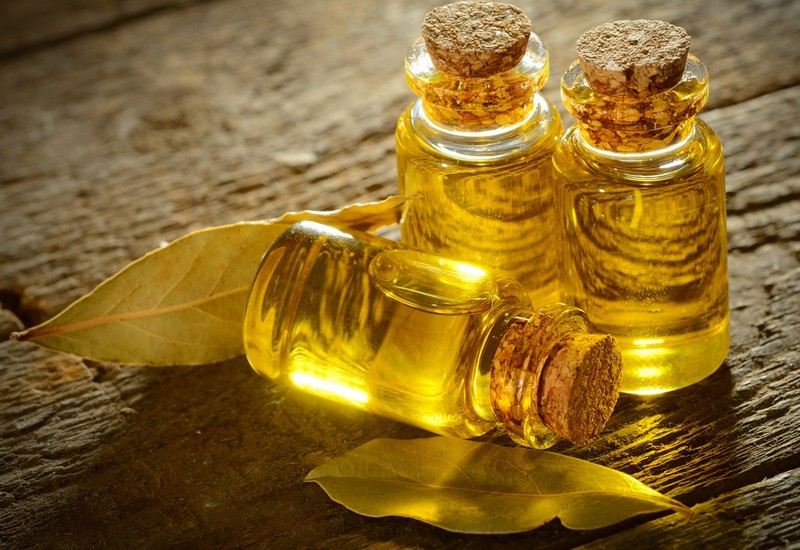 масло из древесины камфорного дерева