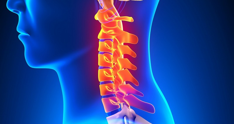 анатомическое строение шейного отдела