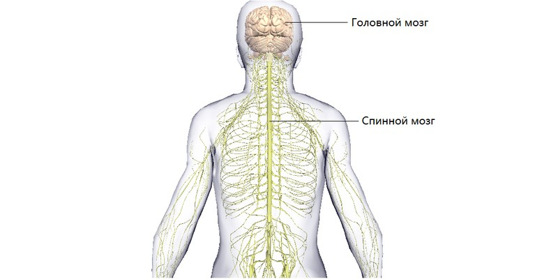 Заболевание синного мозга