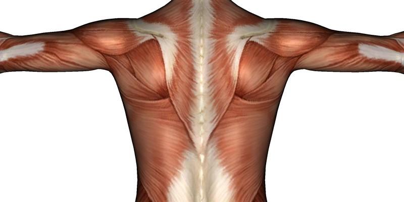 Невралгия спины: симптомы и лечение, народные средства